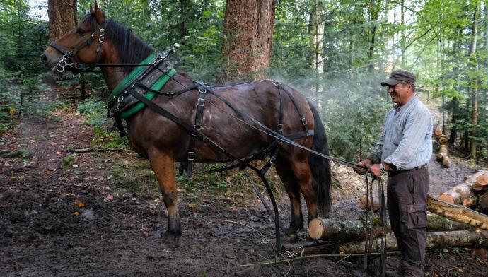 Einsatz im Carl-Zürcher Wald in Teufen