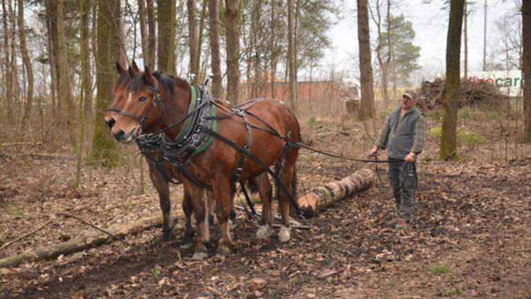 Holzrücken im Kriessner Wäldli