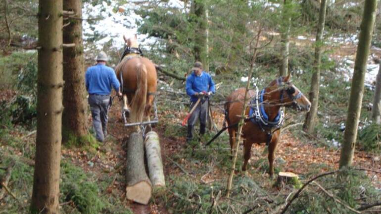 Rheintaler Holzrücker haben einen Verein gegründet